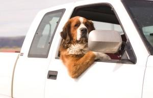 dog_car_21